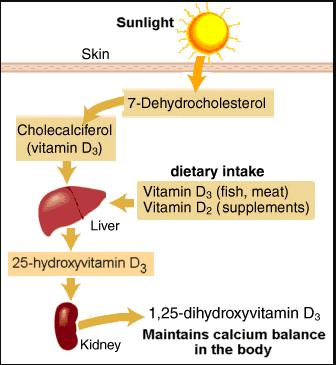 UV-radiation-and-vitamin-D
