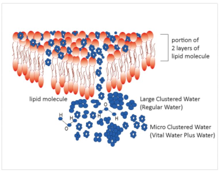 Vital Water Plus Hydrogen Rich Water System clustered water