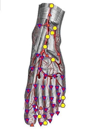 foot-arteries